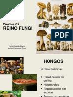 Pràctica 8 Reino Fungi