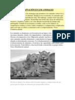 ADAPTACIÓN EN LOS ANIMALES