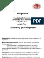 11 - Glucolisis y Gluconeogenesis