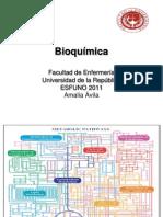 17 -integración y regulación del metabolismo intermediario clase 17