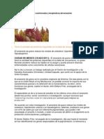 Descubren más valores nutricionales y terapéuticos del amaranto TRABAJO ALVAROOO