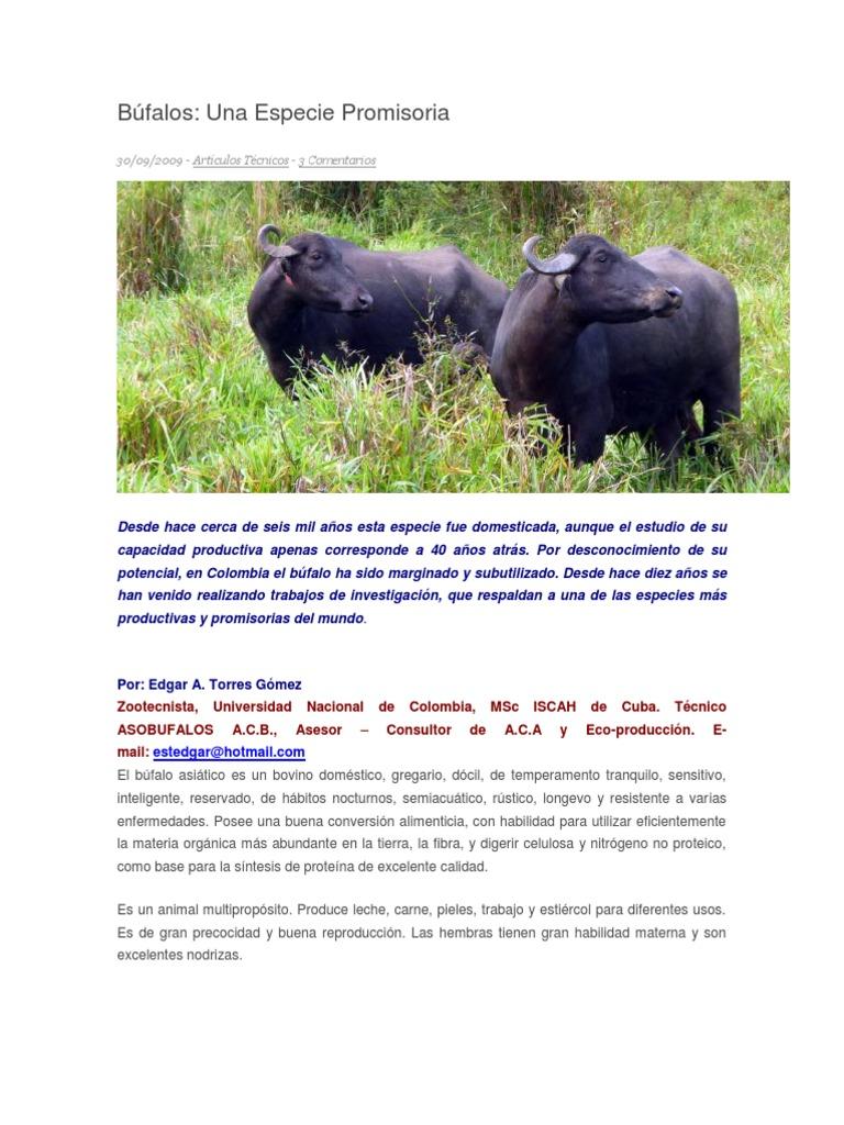 Búfalos una especie promisoria