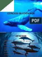 CETÁCEOS EN COSTA RICA