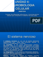presentacion neurona1