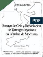 tortugas_crias_Mochima