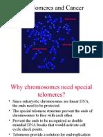 (3) Telomere