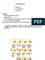 Chlamydiaceae
