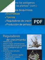 3. Cómo los patógenos atacan las plantas II