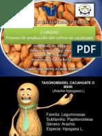Procesos de producción del cultivo de cacahuate o