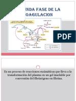 coagulación-factores