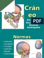 Craneo anatomia