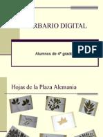 HERBARIO DIGITAL2
