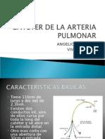 Cateter de La Arteria Pulmonar