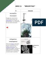Glosario Briofitas1