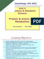 proteinmetabolismf08