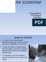 River Ecosystem