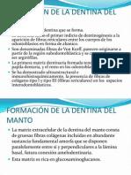 FORMACIÓN DE LA DENTINA DEL MANTO