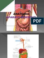 Aparato Digestivo- Anatomia