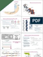 AcidosNucleicos&Cromatina