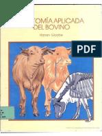 Antomia Del Bovino
