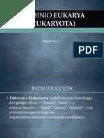 Dominio Eukarya (Eukaryota)