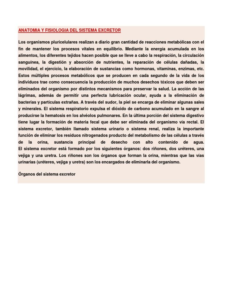 Anatomia y Fisiologia Del Sistema Excretor
