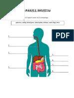 Òrgans aparell digestiu