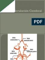 Utf-8''Circulacion Cerebral 2 2do Certamen