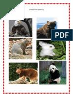 Terrestrial Animals