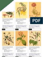 étiquette Botanique