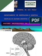 Anatomia ..
