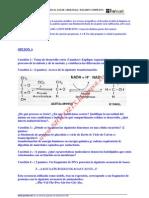 Biologia Selectividad Examen 4 Resuelto Aragon Www.siglo21x.blogspot