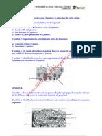 Biologia Selectividad Examen 9 Resuelto Aragon Www.siglo21x.blogspot