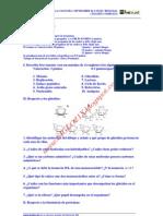Biologia Selectividad Examen 2 Resuelto Castilla La Mancha Www.siglo21x.blogspot