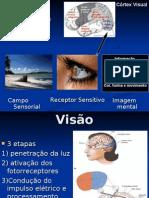 Visão2011