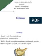 estomago_agronomia