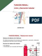 4 Función Renal-Reabsorción y secreción tubular