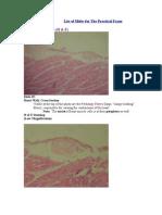 Slides for Histo Practical Exam