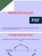 14 RESPIRACION CELULAR