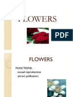 Flowers Botany