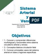 Clase_Sistema Arterial y Venoso_Anatomia