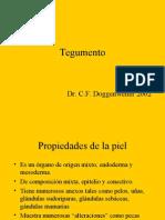 Clase Tegumento Histología