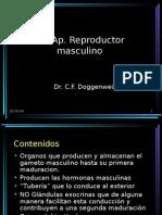 Clase Aparato Re Product Or Masculino Histología