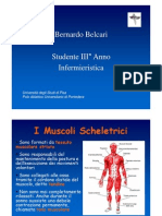 I Muscoli Scheletrici - Bernardo Belcari