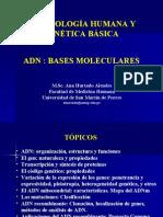 Presentación ADN Bases Moleculares