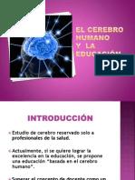 EL CEREBRO HUMANO Y LA EDUCACIÓN.