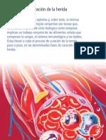 Fases de Curacion Medical Edition