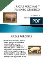 Razas Porcinas y Mejoramiento Genetico