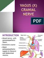 Vagus %28x%29 Cranial Nerve