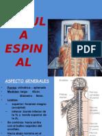 Medula Espinal1